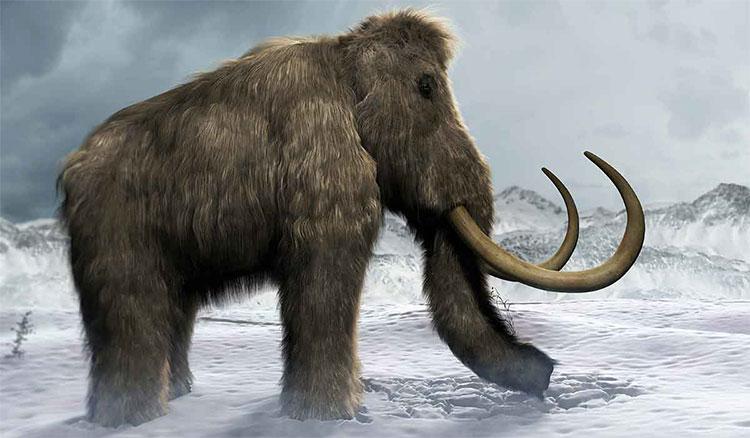 Voi ma mút có thể tái xuất ở vùng Siberia, Nga.
