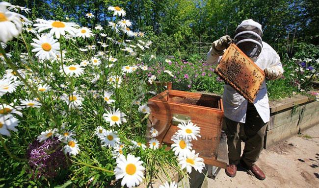Thực vật ở Paris cũng phong phú không kém gì bầy ong.