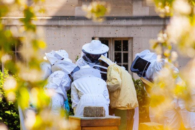 Những chiếc hộp quen thuộc của Paris nhưng bên trong đó là đàn ong đang cư ngụ.