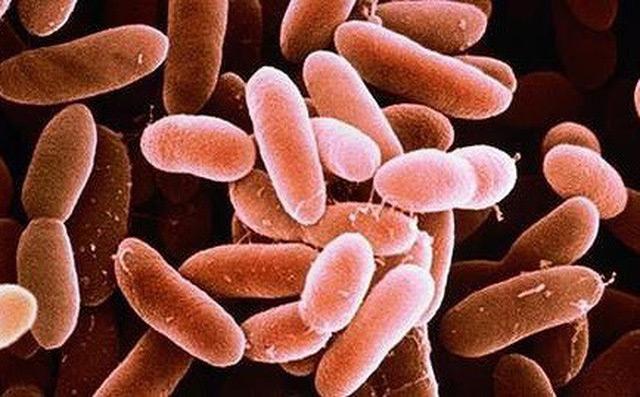 Vi khuẩn gây uốn ván có ở mọi nơi trong đất, cát