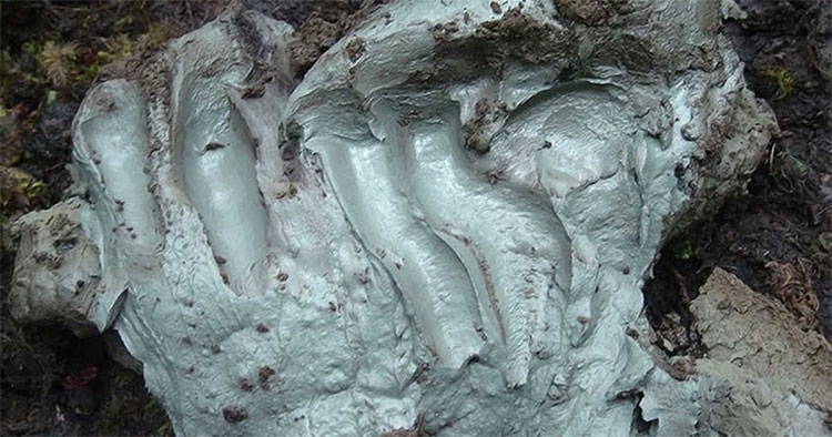 Có 1 loại đất sét có khả năng chống lại vi khuẩn gây bệnh.