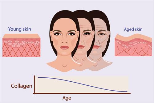 Khi chúng ta già đi, làn da sẽ bắt đầu sản sinh ít collagen và elastin hơn.