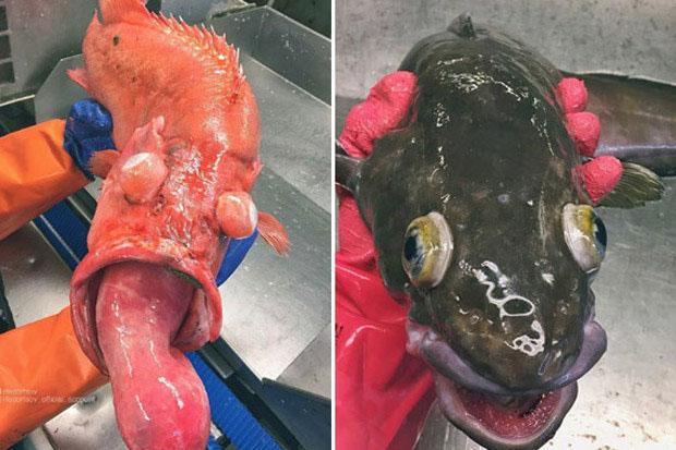 Một trong những quái vật biển sâu kì dị nhất mà con người chưa từng khám phá.