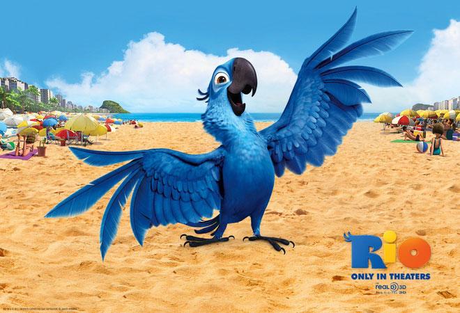 Chú vẹt thần tượng Blu trong Rio.