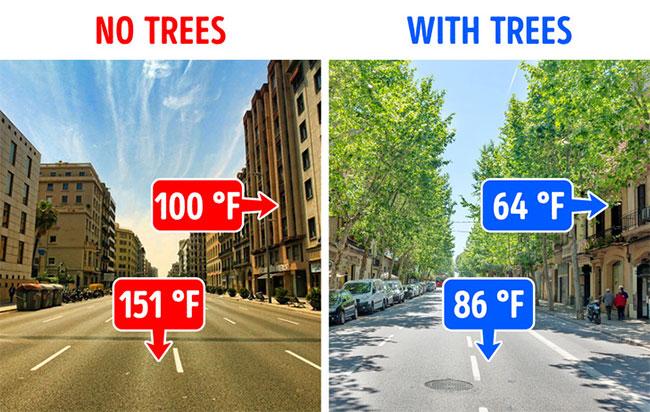 Cây xanh giúp nhiệt độ thành phố mát hơn.