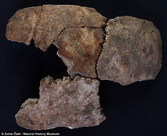 Dấu hiệu thể hiện rằng những người làm trong cung điện đã bị đâm xuyên qua sọ bởi một vật sắc nhọn