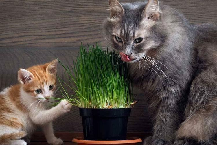 Việc ăn cỏ liên tục chính là dấu hiệu cho thấy mèo muốn chuyển đi nơi khác.