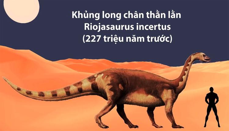 Khủng long chân thằn lằn Riojasaurus incertus