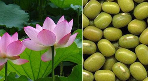 Sen hồng và đậu xanh là thực vật có nhiều trong tự nhiên.