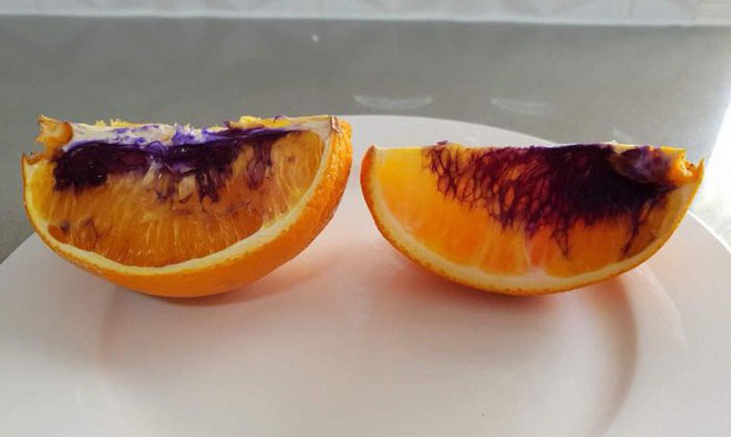 Hai miếng cam chuyển sang màu tím chỉ sau 1 đêm.