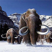 Phát hiện bãi đất nơi người cổ đại thảm sát voi ma mút