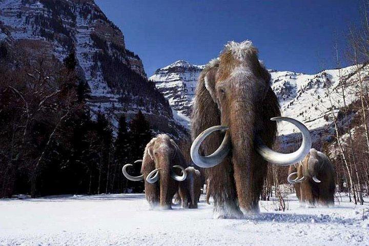 Nhiều ngà và xương voi ma mút được tìm thấy ở khu vực khai quật ở vùng Drasenhofen.