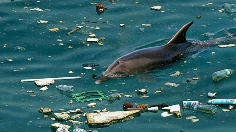 Cá heo mũi chai sắp bị giết chết bởi rác nhựa.