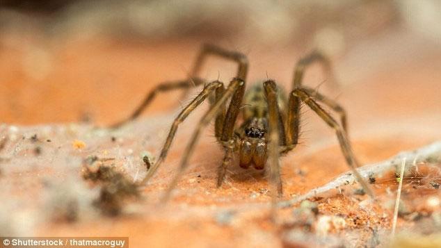 Tất cả các ngôi nhà trên thế giới này đều có nhện sinh sống