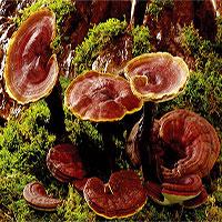 Khó tin loại da đặc biệt được làm hoàn toàn từ… nấm!