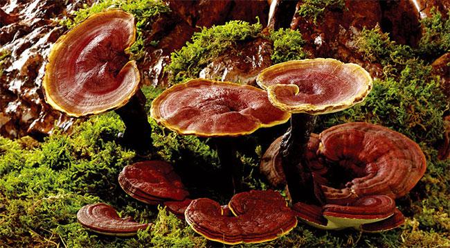 Myco cũng thể hiện sự vượt trội khi được đặt lên bàn cân với các loại da tổng hợp.