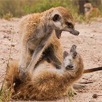Lý giải nguyên nhân sống thọ của những con vật đầu đàn