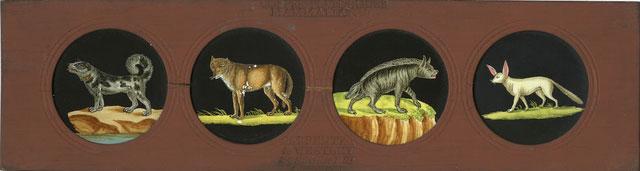Một tấm trượt vẽ bốn loài động vật khác nhau.