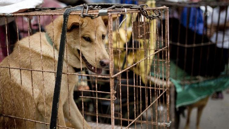 Ăn thịt chó - tập tục gây tranh cãi trong lịch sử - KhoaHoc.tv