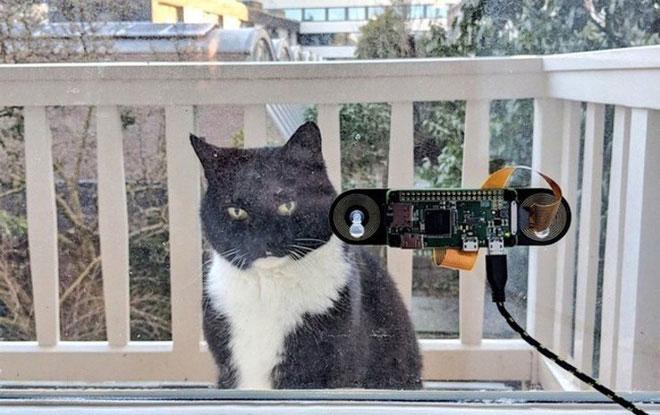 Đến mèo cũng có Face ID