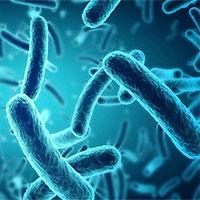 """Dùng vi khuẩn gây tiêu chảy để phát triển """"pin sinh học"""""""