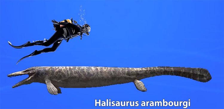 Halisaurus arambourgi