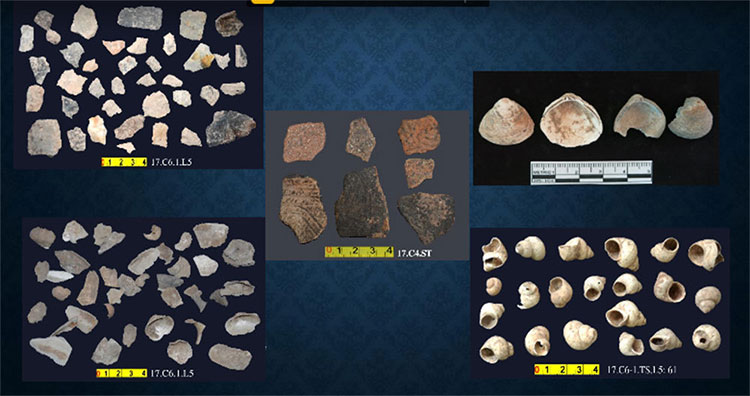 Hàng chục nghìn mẫu vật được tìm thấy trong hố thăm dò rộng 6m2, sâu 1,85m, gồm 8 lớp đất.