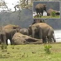 """Kinh ngạc cảnh 300 con voi khóc thương ở """"đám ma"""" voi đầu đàn bị giết"""