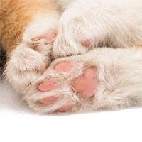 7 sự thật khiến bạn ngã ngửa về đôi chân ngọc ngà của các boss mèo