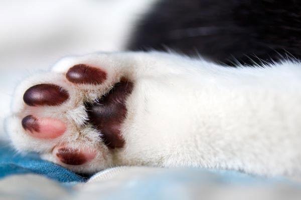 Lòng bàn chân của boss thường có màu sắc phù hợp với phần còn lại của cơ thể.