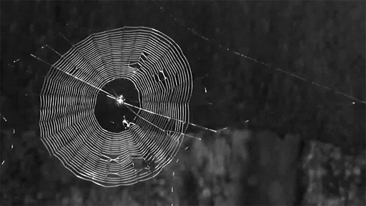 Tơ nhện là cảm hứng cho một nghiên cứu mới tạo ra được loại vắc xin có hiệu quả chủng ngừa tốt hơn.