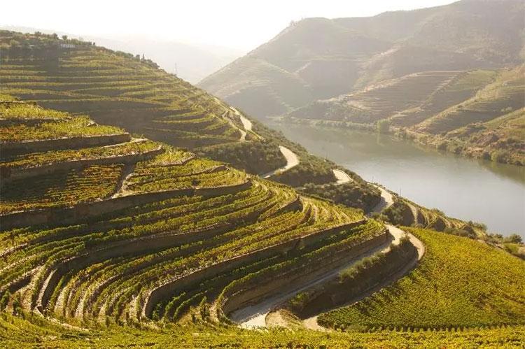 Sắc đỏ cam và vàng của ruộng nho bậc thang dọc bờ sông ở thung lũng Douro, Bồ Đào Nha