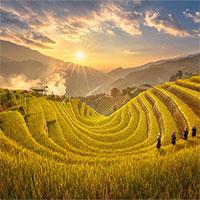 Chùm ảnh Mù Cang Chải vàng rực mùa lúa chín