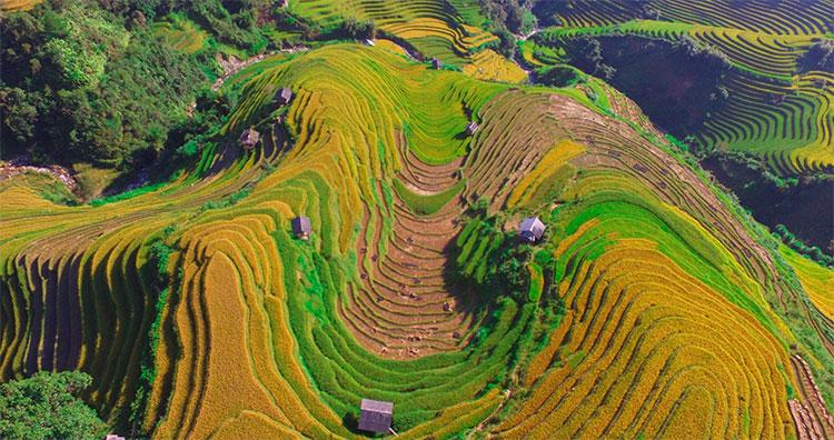 Đôi chỗ trên các sườn đồi, một vài thửa ruộng còn đan xen giữa sắc vàng, sắc xanh là màu nâu của những thửa ruộng đã thu hoạch.