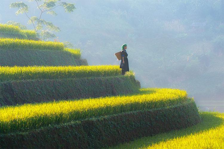 Huyện Mù Cang Chải thuộc khu vực vùng cao tỉnh Yên Bái, cách Hà Nội gần 300km về hướng Tây Bắc.