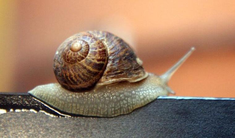 Chất nhầy của một số loài ốc sên được chứng minh là rất tốt cho da