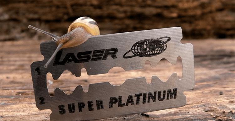 Ốc sên có thể bò qua lưỡi dao cạo an toàn.