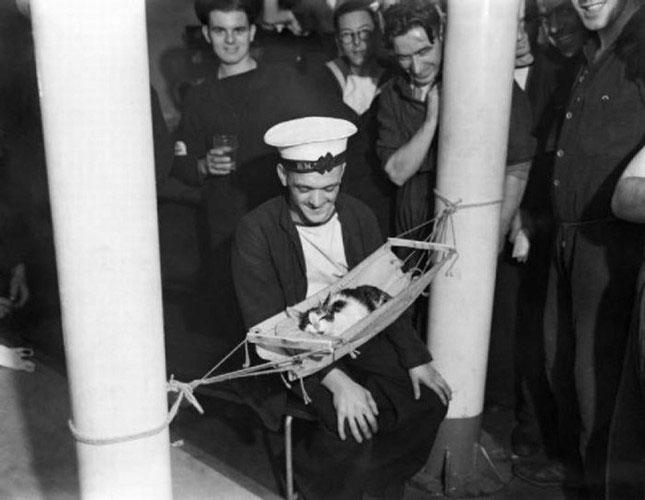 Các thủy thủ Nga ngắm nhìn chú mèo nhỏ đang say giấc ngủ năm 1941.