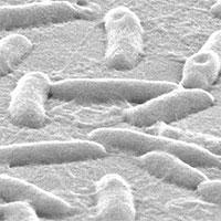 Dùng kim loại gali chữa khỏi nhiễm trùng phổi