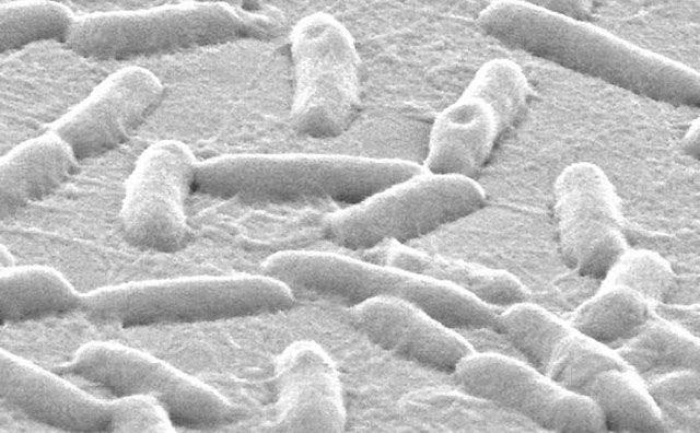 Một khi thâm nhập vào bên trong vi khuẩn, kim loại gali phá vỡ hoàn toàn hoạt động của mầm bệnh