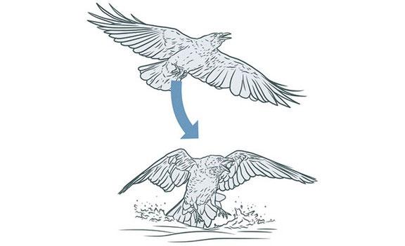 Áp suất không khí tăng giúp chim bay dễ dàng hơn nhiều so với hiện giờ.