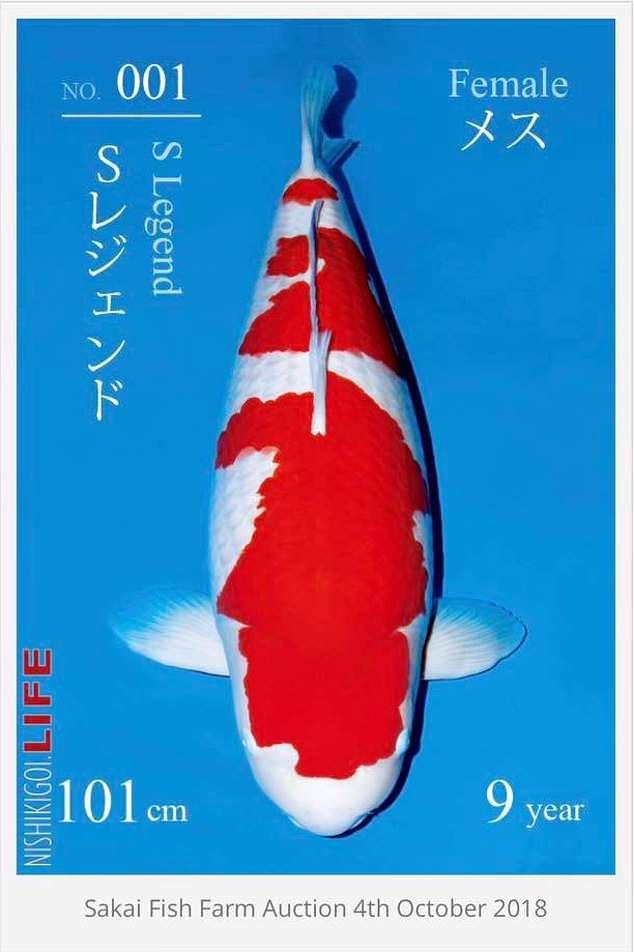 S Legend trên poster rao bán của trại cá Saki.