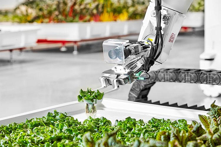 Robot Angus theo dõi cây trồng trong nông trại.