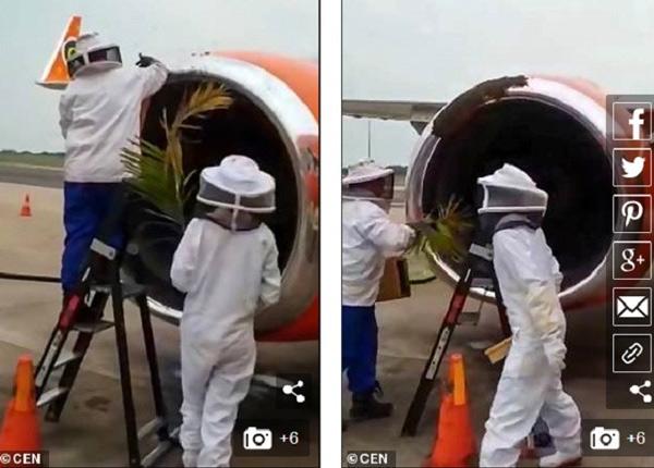 Đàn ong bám vào động cơ máy bay thương mại