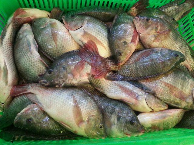 Cá rô phi chứa ít chất dinh dưỡng.