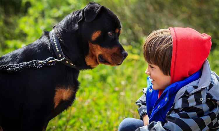 Những người bình tĩnh và ổn định ít có khả năng bị chó tấn công hơn những người sợ hãi