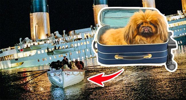 Tàu Titanic còn có 12 chú chó và 3 trong số đó cũng được cứu.