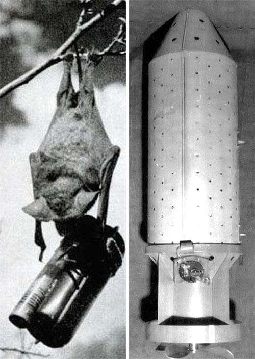 Theo như kế hoạch, lũ dơi sẽ mang theo bom napalm, thả xuống đầu kẻ thù.