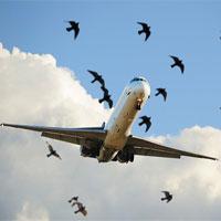 Vì sao những chiếc máy bay nặng nề lại có thể bay lượn như những chú chim?