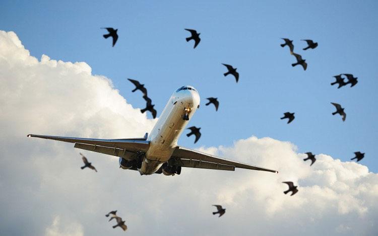Để bay được thì cả máy bay và chim đều phải thắng được lực hút Trái đất.